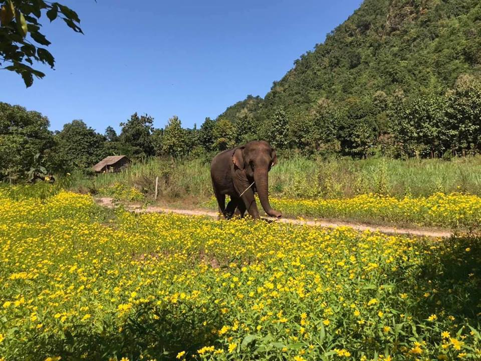 Green Hill Valley Elephant Camp