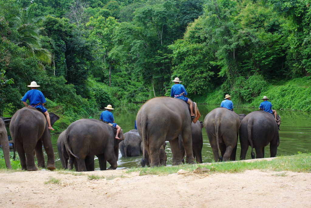 Asian Captive Elephant Standards